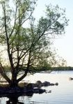tree by waters